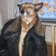 dogiex